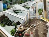 Ravage in Zwolse volkstuinen: honderd tuinen vernield