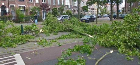 2200 populieren gekapt in Den Haag: 'onveilige' bomen niet meer te redden