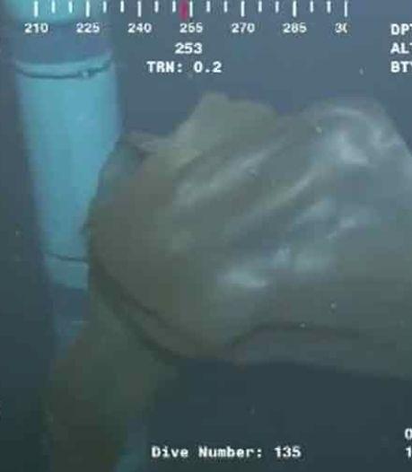 Une créature sous-marine divise les scientifiques