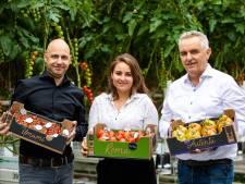Wim Peters Kwekerijen gaat zelf de tomaten verkopen