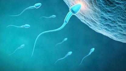 Sperma bedreigd door 'modern leven': 60% minder zaadcellen dan 40 jaar geleden