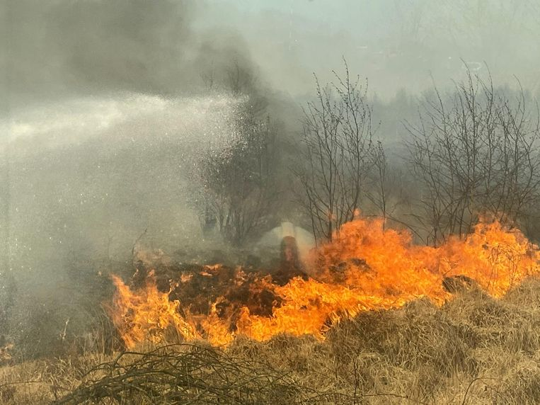 Het vuur woedde hevig op het Groot Schietveld. Beeld Toon Verheijen