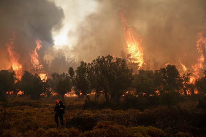 De Griekse brandweer worstelt met bosbranden in verschillende regio's.