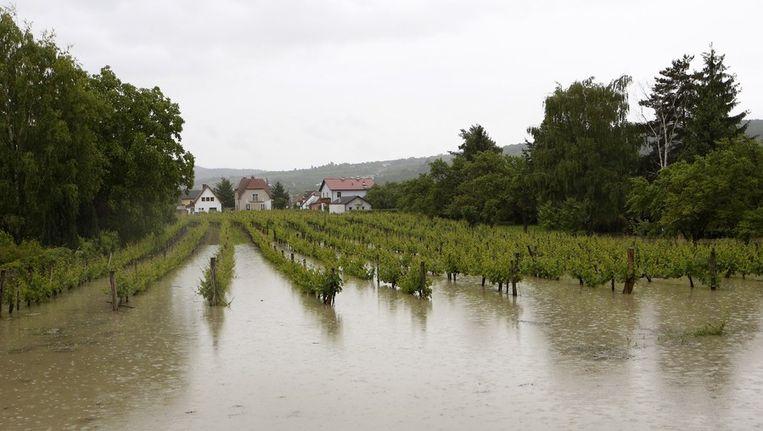 Een ondergelopen wijngaard bij Mautern an der Donau in Oostenrijk Beeld afp