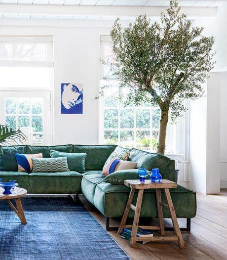 'Een boom in je huis is helemaal hot'