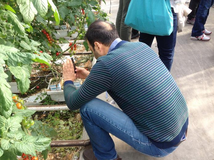 Een Turkse bezoeker is zeer geïnteresseerd in de Boekelse mini-tomaatjes.