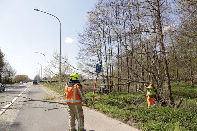 De brandweer kwam de overhellende boom verwijderen.