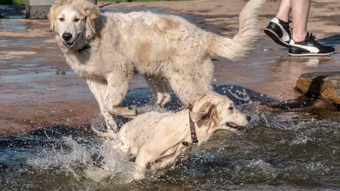Volop vraag naar huisdieren: 'Die kleine schattige pup is nu een energieke puber'