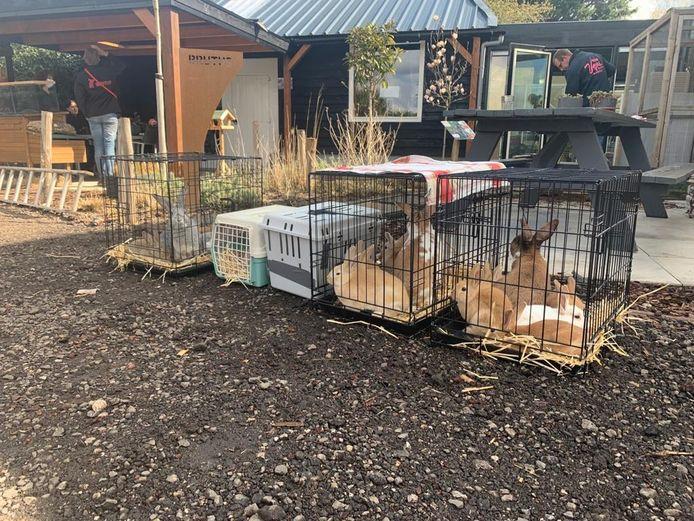 Een deel van de verwaarloosde dieren waar Stichting Flappus zich over ontfermt.