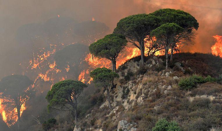 Onder andere Sicilië kreeg in 2017 af te rekenen met een recordaantal bosbranden door de droogte en hitte. Beeld afp