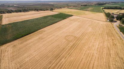"""Droogte zorgt voor kopzorgen bij boeren: """"De toestand is bijzonder ernstig"""""""