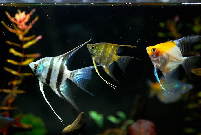 Vissen in een aquarium.