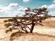 Ontdekkingsreis op de savanne
