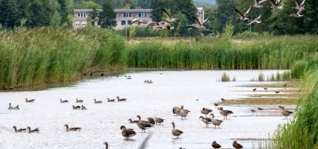 Lepelaar binnen handbereik in Park Lingezegen: 'Woningbouw betekent einde verhaal voor veel vogels'