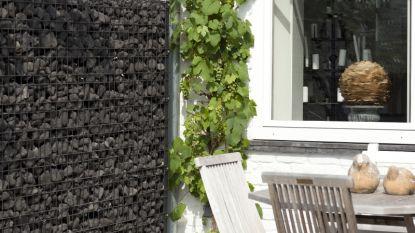 Instant privacy in je tuin? Dat kan met deze oplossingen