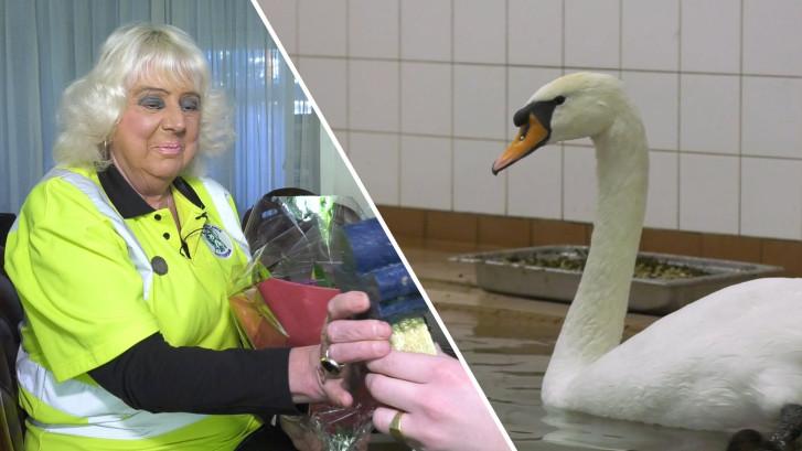 Corry redde vele zwanen uit de olie: 'Je denkt er niet bij na, je doet het'