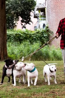 Hondenuitrenveld in Harmelen Noord kan er nog dit jaar zijn