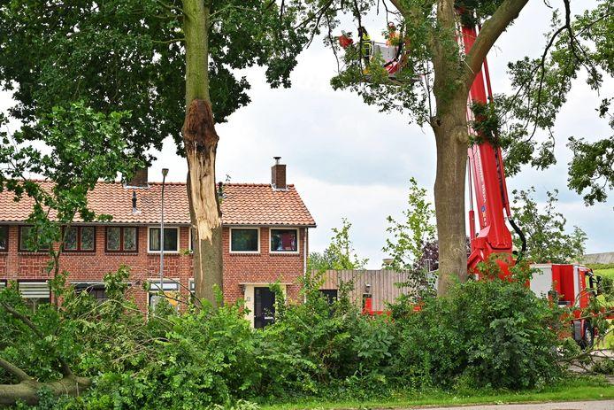 Een boom staat op omvallen in de Sporenbergstraat in Zevenbergschen Hoek.