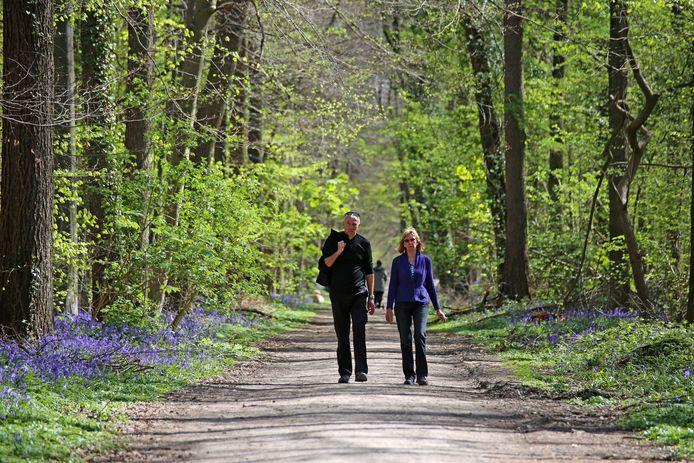 Genieten van de natuur, dat doen we graag in Halle. Zoals in het Hallerbos wanneer de hyacinten bloeien.