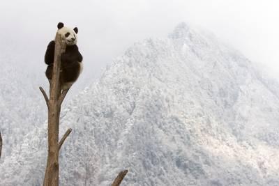 helft-van-planten-en-dieren-in-natuurgebieden-in-gevaar-door-klimaatverandering