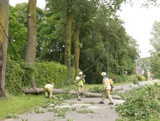 Enkele woningen in Zoetwaterstraat zonder elektriciteit nadat omgewaaide boom kabel vernielt