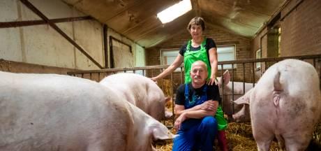 Familie Vlemminx in Oirschot stopt met varkenshouderij: 'Je bent de wedstrijd aan het verliezen'