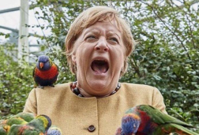 L'image de Merkel hurlant alors qu'elle était envahie par des perroquets loriquets australiens colorés, qu'elle essayait de nourrir a retenu l'attention des agences de presse mondiales ce vendredi.