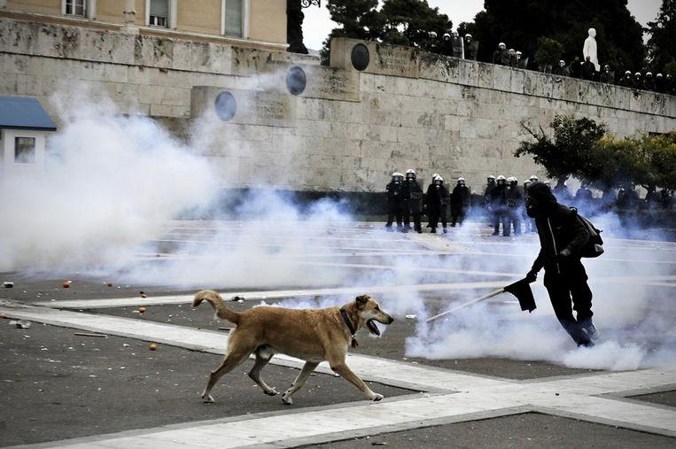 6 december 2011: Loukanikos is van de partij. © AFP Beeld