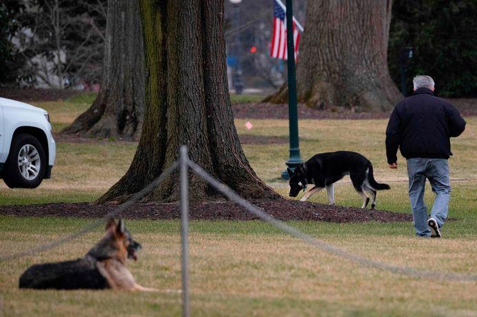 De Duitse herders Champ en Major bij het Witte Huis.