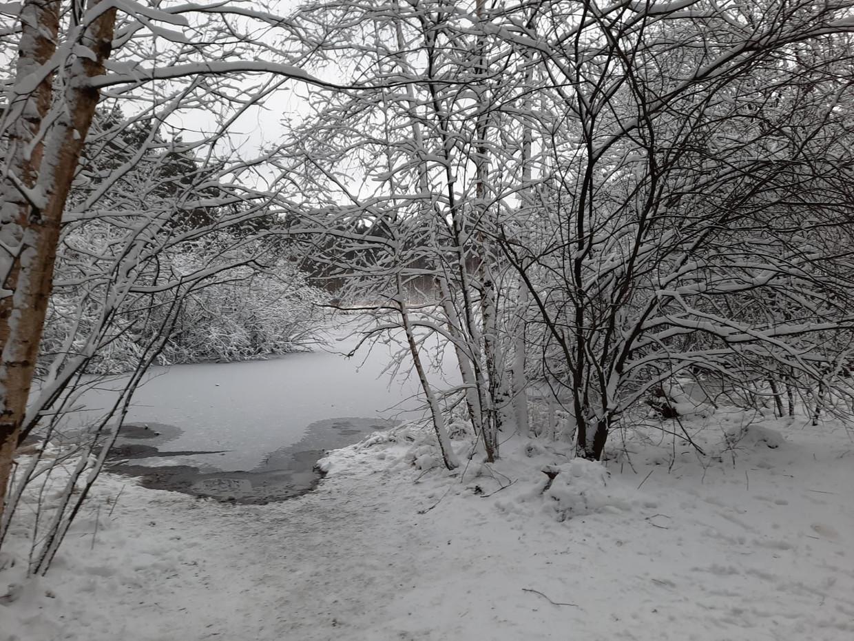 Vorige week was het land nog bedekt onder een wit sneeuwtapijt.  Beeld Toon Verheijen