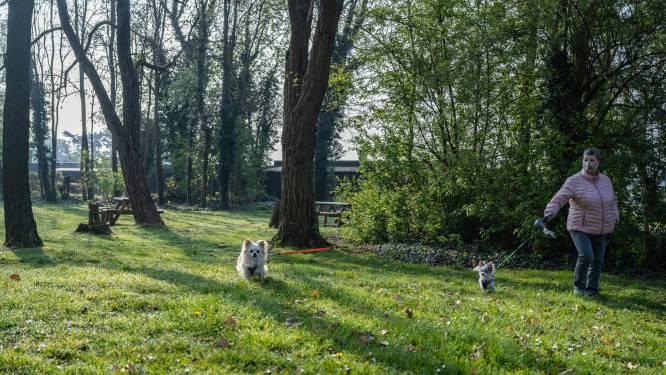 Nieuw paradijs voor honden: losloopweide van 2.000 vierkante meter midden in park 't Kruis