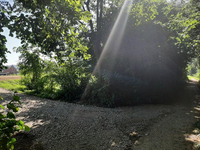 Het Hemmens bos op z'n smalst, nabij de begraafplaats op de rand van Zetten.