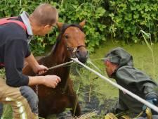 Brandweer redt paard uit sloot bij Zuidland