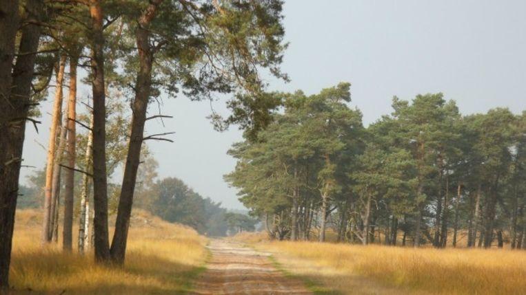 Brandgevaar Code Oranje.Code Oranje Voor Alle Bossen En Natuurgebieden Groot Gevaar