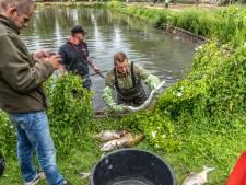 Rioolwater nekt zeker 60 vissen in Zwolse vijver