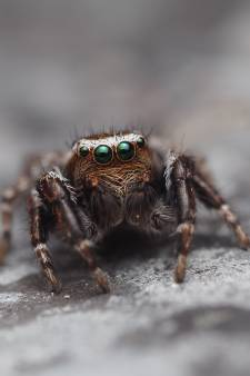 De beheerder van deze Facebookgroep over spinnen was er eerst bang voor