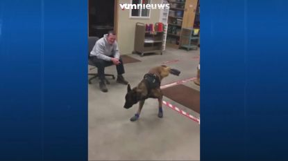 Hond is geen fan van zijn nieuwe schoenen