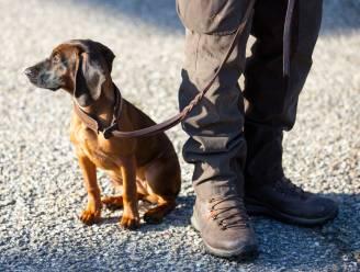 """Tot acht maanden cel voor hondenmishandelaars: """"Hij gooide puppy van boven zijn hoofd op de grond"""""""