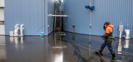 Opruimen drijfmest bij energiecentrale Harderwijk duurt dagen