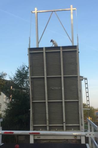 Opvallende beelden uit Nederland: hond Remy (1) klampt zich bibberend en piepend vast aan brug als die plots opengaat