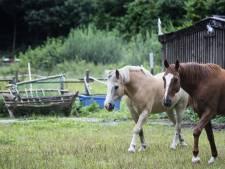 Regels voor schuilstallen dieren in Wierden: 'Beter dan clandestiene bouwsels'