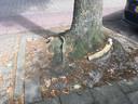 De bomen in de Hei-akker in Kaatsheuvel zorgen voor problemen met het riool.
