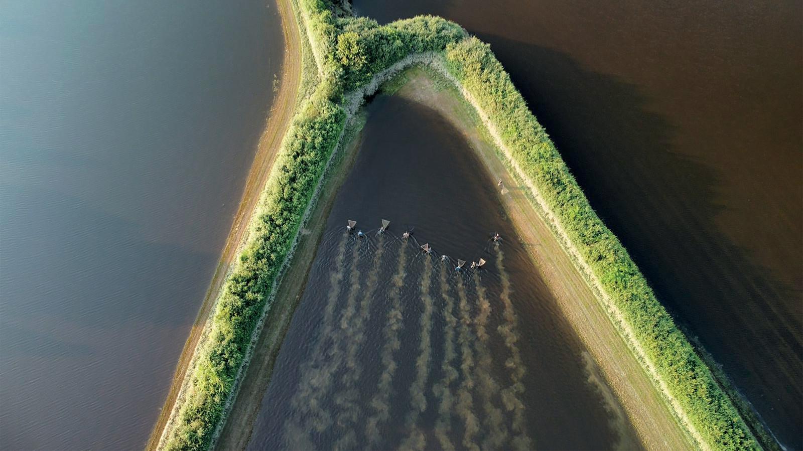 Sportvissers krijgen ondersteuning van een drone bij hun zoektocht naar karpers in ondergelopen weilanden bij Oeffelt.