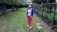 Honden kunnen loslopen op weide langs Nete
