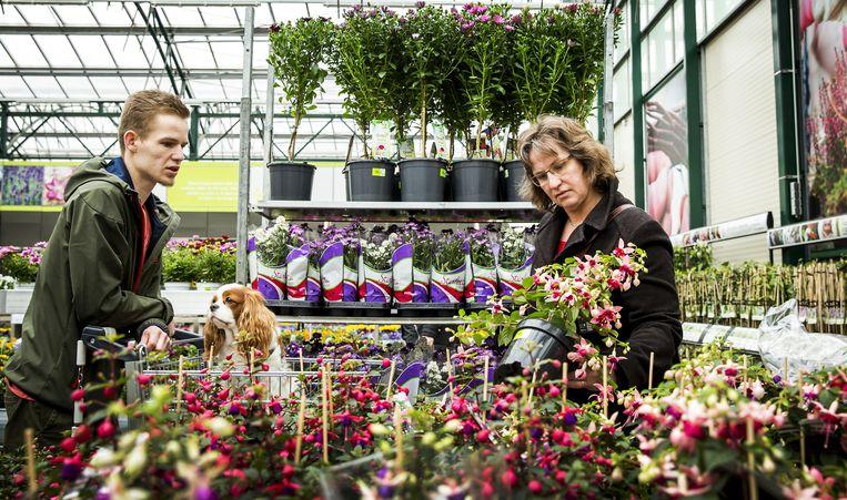 Een tuincentrum in Zevenhuizen. Beeld ANP