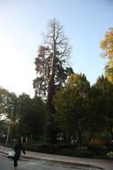 De boom in betere tijden.