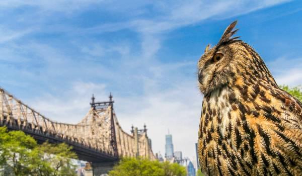 Wasberen in The Bronx en zeearenden boven Manhattan: New York barst van de natuur