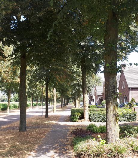 Gemeente Boekel en bewoners betalen bomenkap sam-sam
