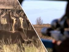Rechter verbiedt afschieten herten Oostvaardersplassen: noodzaak niet voldoende aangetoond