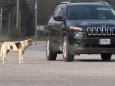 Ce chien est devenu célèbre pour une raison surprenante